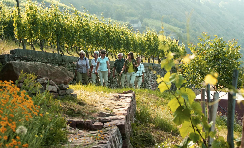 Divino-Wir-Weinwanderung